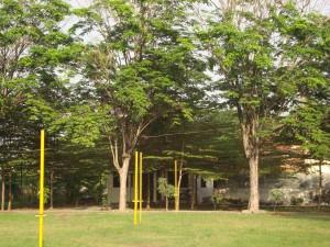 Kantin Kampus diantara kerimbunan pohon kersem